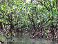 Mangrove plants surrounded by water
