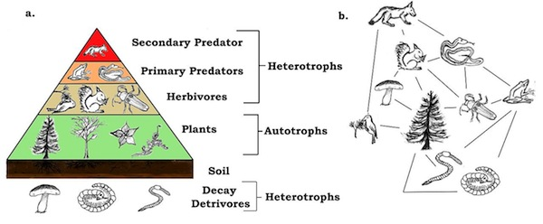 Food webs parameter from top to bottom - Secondary predator, Primary predator, Herbivores, Plants, soil and Decay detrivores