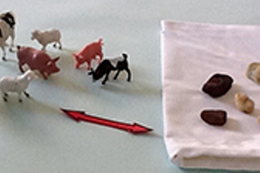 Toy animals and rocks are used to demonstrate counting