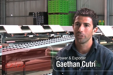 Gaethan Cutri, Grower and exporter